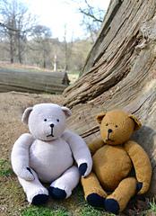 Bears5_small