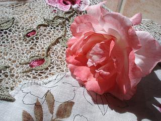 Rosa6_small2