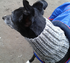 Ravelry: Dog Snood or Neck Warmer pattern by Jacqueline Gibb