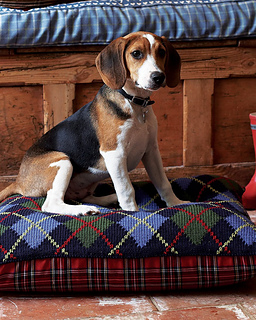 Debbie Bliss Knitting Patterns For Dogs : Ravelry: # 28 Argyle Bean Bag Dog Bed pattern by Debbie Bliss