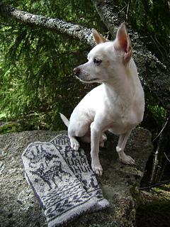 Chihuahua-lapaset3_small2