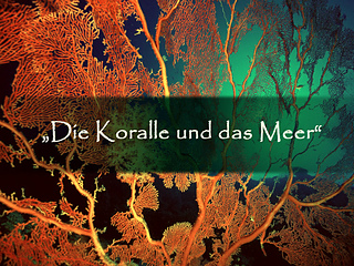Koralle_meer_bild_small2