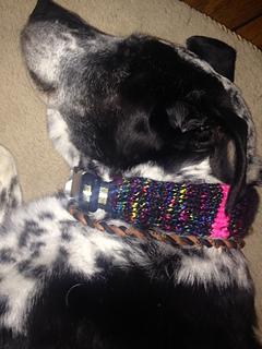 Dog_collar2_small2