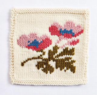 Rose_anemone_small2