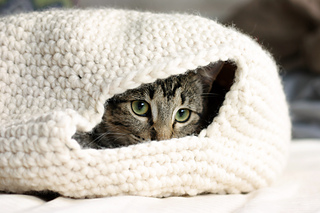Cat_oven_2_small2