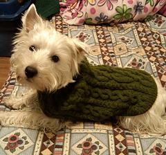 Casey_s_new_sweater