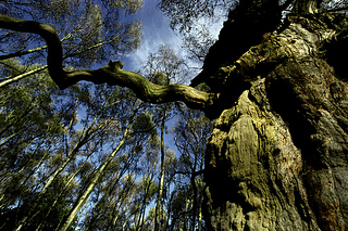 Sherwood-forest_small2