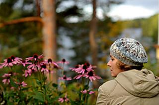 Winter_forest_tam_medium2_small2