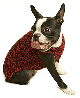 Dog_sweater_1_lb_late_2006_small2
