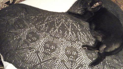 Roscoe_and_the_halloween_shawl_medium
