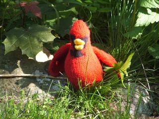 Cardinal_small2