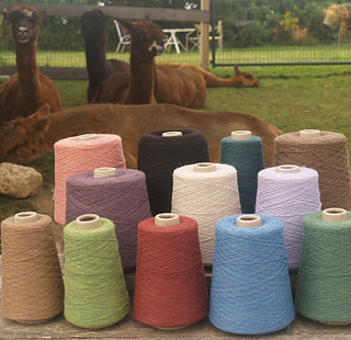 Alpaca_and_cones_small2