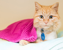 Awla_sherbet_cat_and_cowl_3