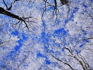 Snow-trees_small2