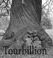 Torbillion_tree_small_best_fit