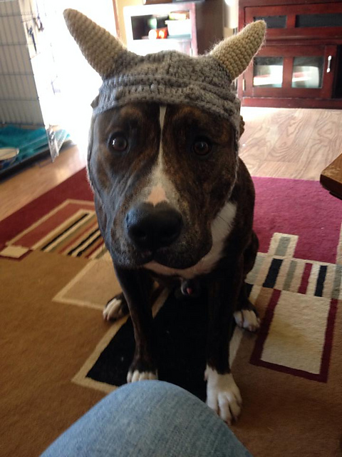 patterns   Mikayla Hoople s Ravelry Store.   Dog Viking Hat 1af5e1e6921