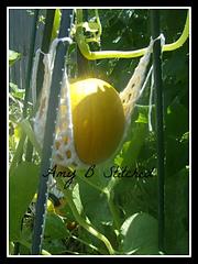 Pumpkin_hammock_1_small