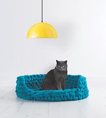 Cat_crop_small