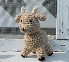 Nancys_cow_1_small