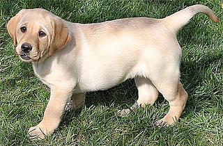 Sunnydog_small2