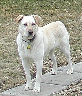 Gypsydog_small2