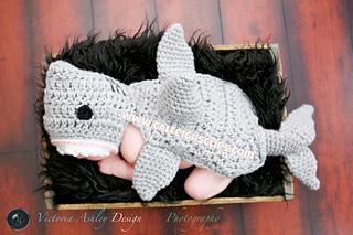 Shark4_small2