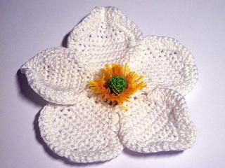 Whiteanemone_pattern1_small2