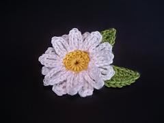 Daisies_002_small