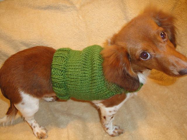 Ravelry Dachshund Anxiety Sweater Pattern By Chiwaluv Amigurumi