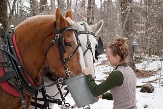 Horses_drinking_small2