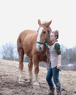 Pastured_horse_small2