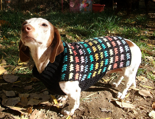 Ravelry Crochet Dachshund Or Small Dog Sweater Pattern By Copper