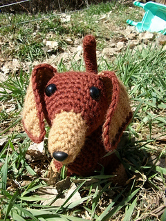 Brown_doxie_007_small2