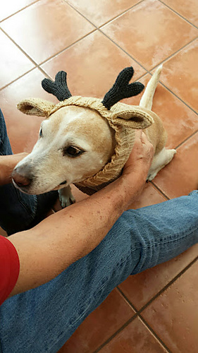 Ravelry To Humiliate The Dog Pattern By Amoena Online Gorgeous Dog Hat Knitting Pattern