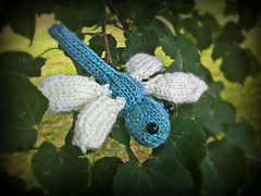 Dragonfly6edited_small