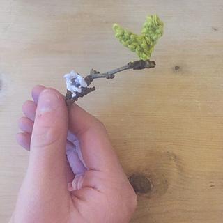 Bloss11_small2