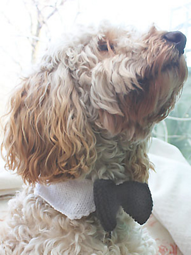 Ravelry Dog Bow Tie Pattern By All About You