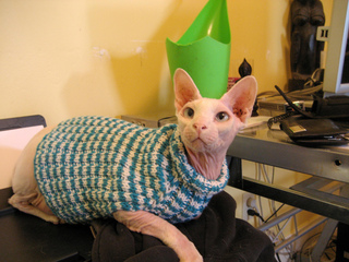 Ravelry Cats Love Sweaters Pattern By Christine Landry