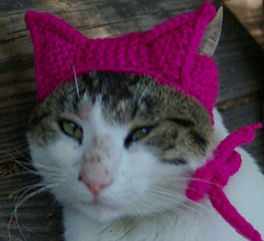 Pussy_hat_for_kitty_cats_view_1_small