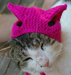 Pussy_hat_for_kitty_cats_jaunty_angle_2_small