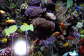 Fishtank_small2