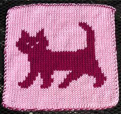 Cat__1__small