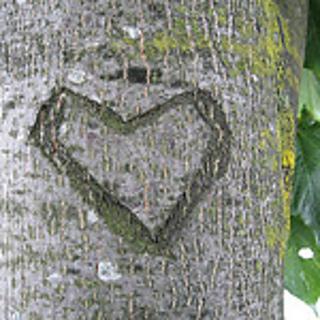 Treeheart_small2