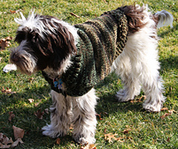 Dog_sweater2_small_best_fit