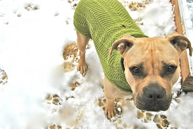 Ravelry Nala Needs A Coat Large Dog Sweater Pattern By Jessica Morsell