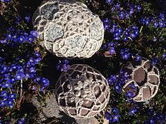 Gardensnowflakes_small