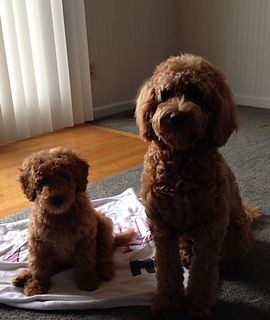 Pups_sandy_and_brutus_small2