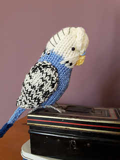 Budgie_1_small2