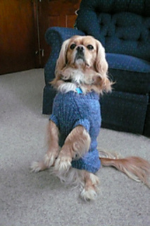 Ravelry Basic Knitted Dog Sweater Pattern By Judith L Swartz