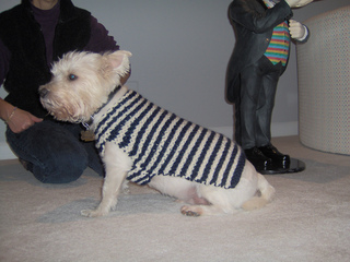 1a22f35a939 Ravelry  City Stripes Dog Sweater pattern by Lion Brand Yarn
